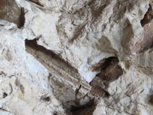 רודיטים - מאובנים בשביל הגיאולוגי בנחל המערות