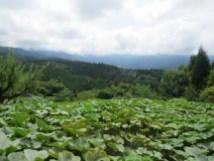 הכפר מגומה בעמק קיסו