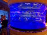 אקוואריום הכרישים במלון מנדליי ביי לאס וגאס