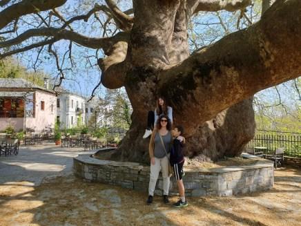 עץ הדולב בעיירה טסגרדה,