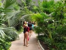הגנים הטרופיים בפארק המים טרופיקל איילנדס