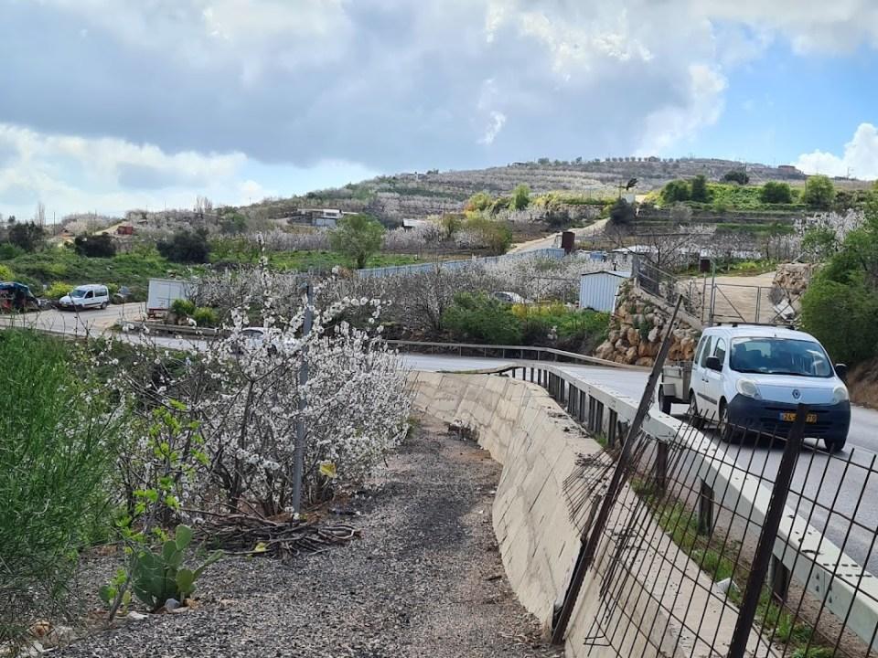 פריחת הדובדבן בעמק יעפורי בצפון הגולן