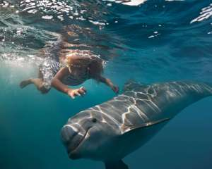 Swim with wild dolphins in Australia #swimwithdolphins #dolphins #wilddolphins #australia #waterexperiences