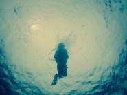 Diving in Anilao, Batangas