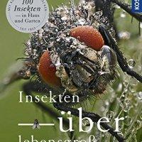 Insekten überlebensgroß von Matthias Helb