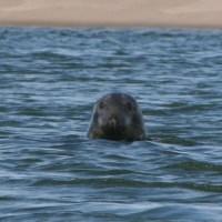 Cape Cod  - Sept 2014