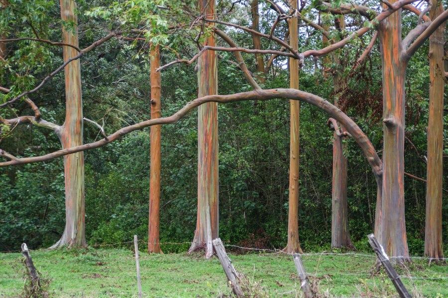 Tree1IMG_2667.jpg