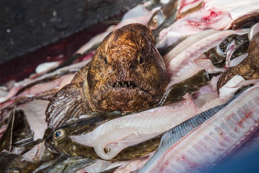 Deadfish1.jpg