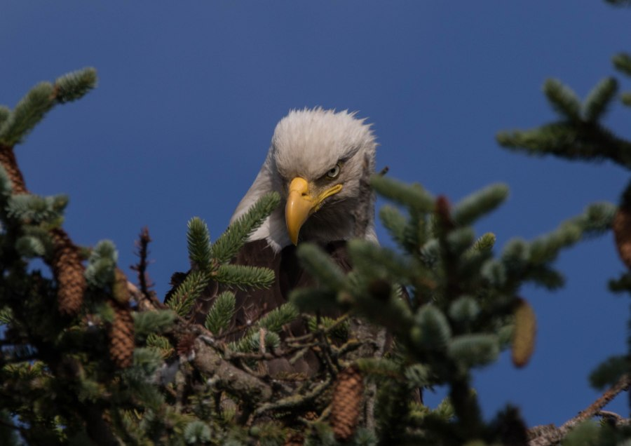 Eagle25.jpg