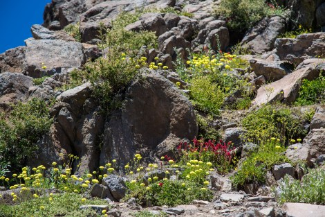 Trail-08.jpg