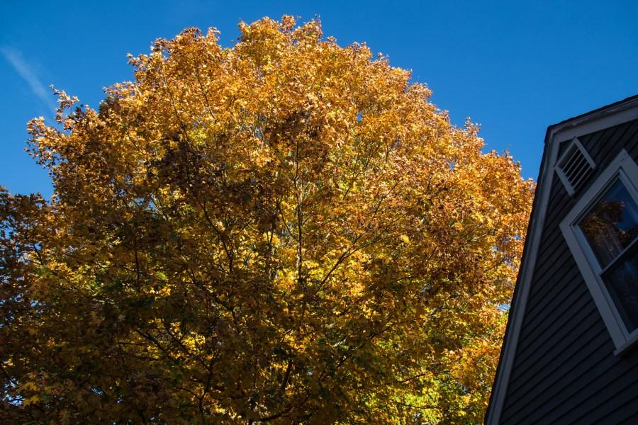 Foliage-01.jpg