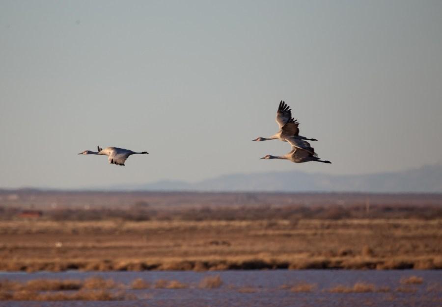 Cranes-06.jpg