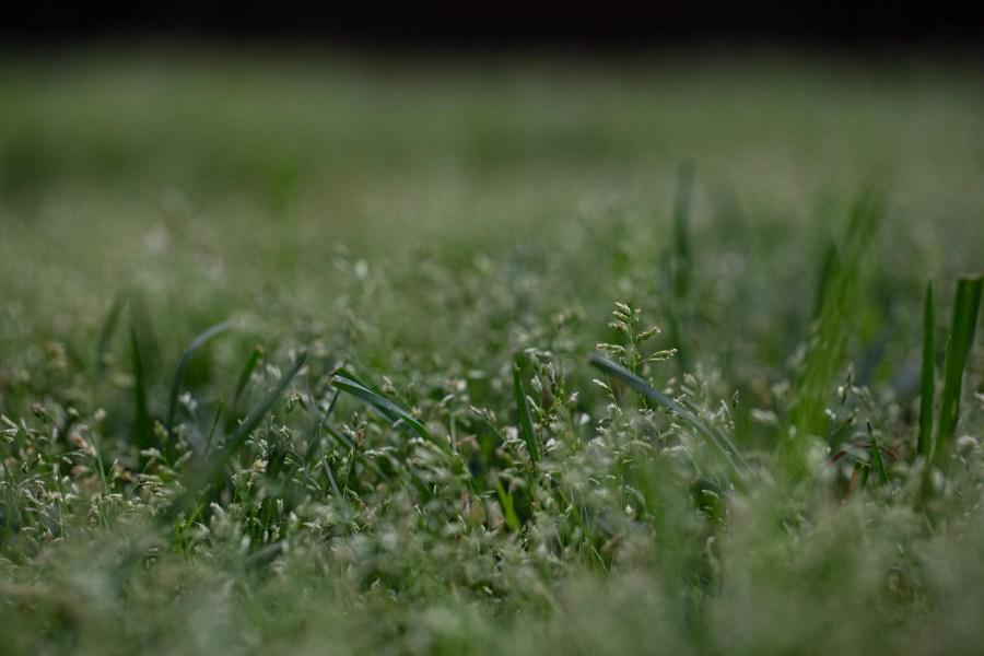 Grass-01.jpg