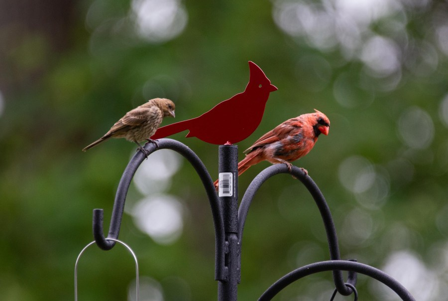 Birds-04