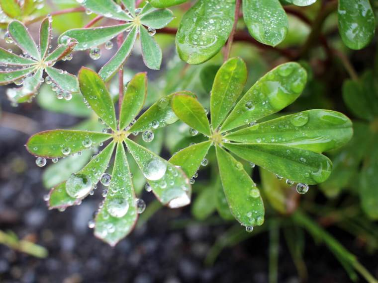 Iceland Green Water Droplets