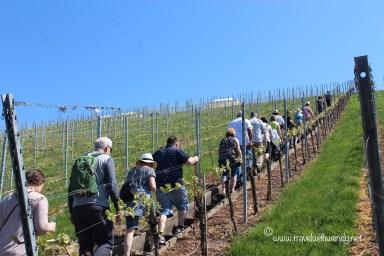 TWW - Esslingen wine stairs