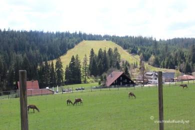 TWW - hiking in Kaltenbronn