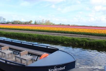 TWW - tulip fields