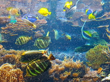 tww-fish-in-tropical-aquarium-visit-holland