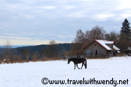 horses-in-winter-pasture-black-forest
