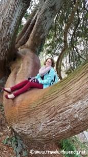thats-a-big-tree