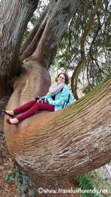 thats-a-big-tree
