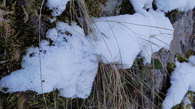 winter-close-up