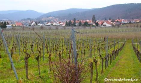 Vineyards of Gimmeldingen