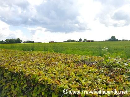 Westvleteren - fields of green