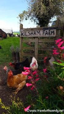 Kilsham Farm - pastures