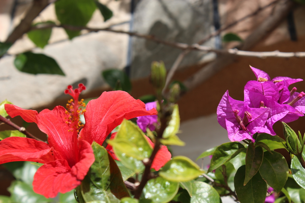 Hibiscus and more ~ Nador
