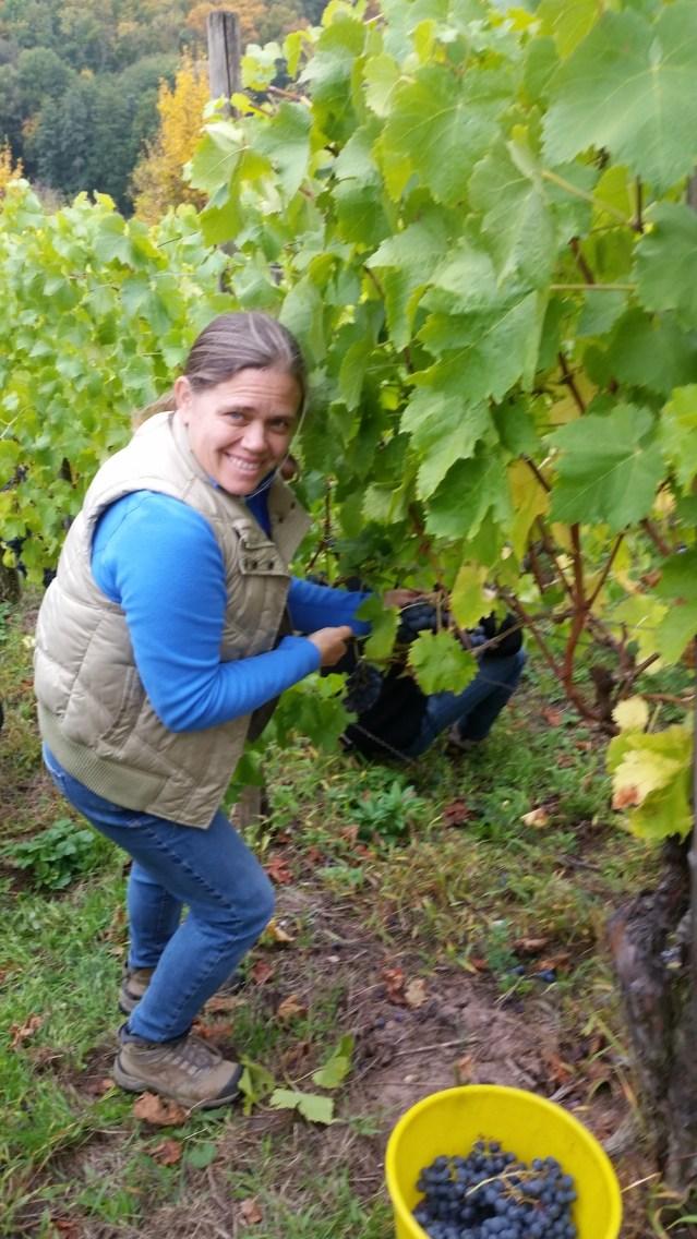 Having fun picking local crops!