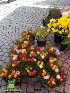 Lovely flowers - Stuttgart