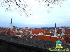 Views with our feather friends - Tallinn
