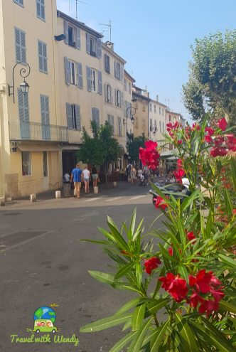 Roses in bloom - Antibes - French Riviera