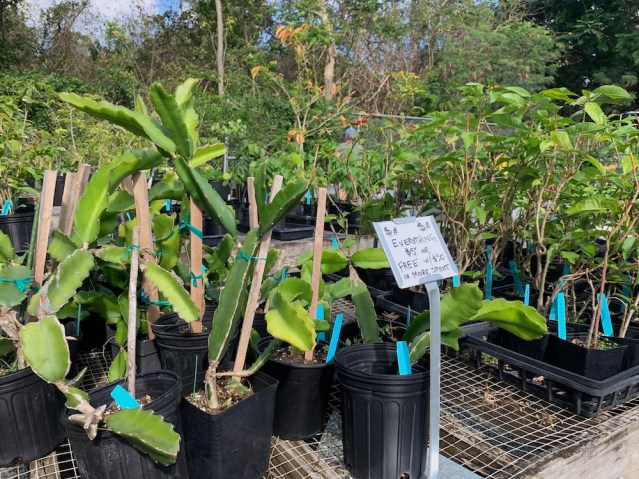 Plant Sale - USVI Botanical Garden