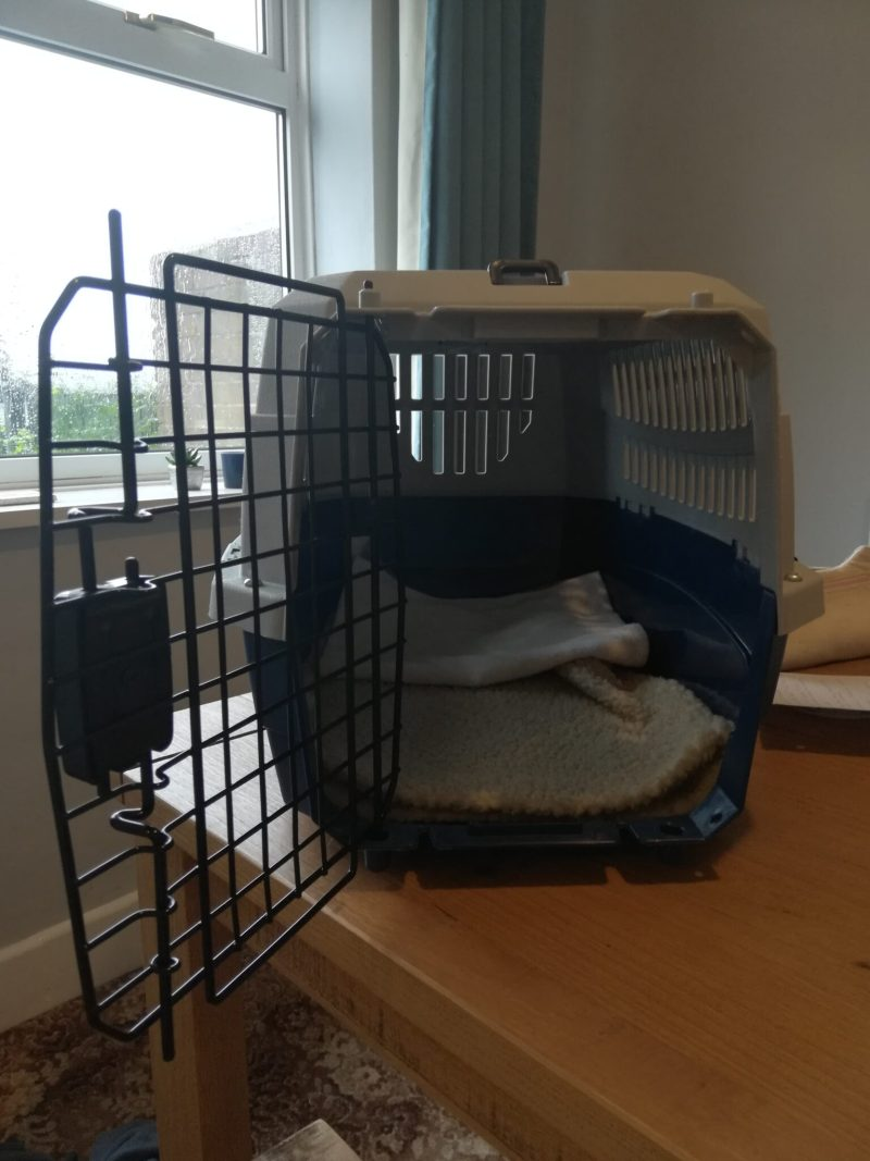 Cat carrier with door wide open