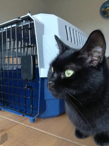 Argos cat carrier and black cat
