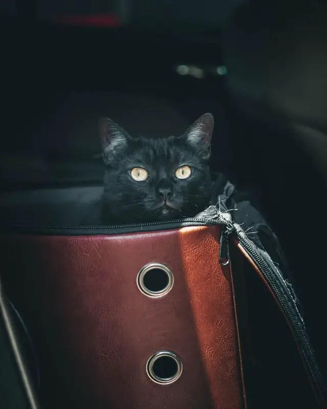 cat sitting in a cat car seat