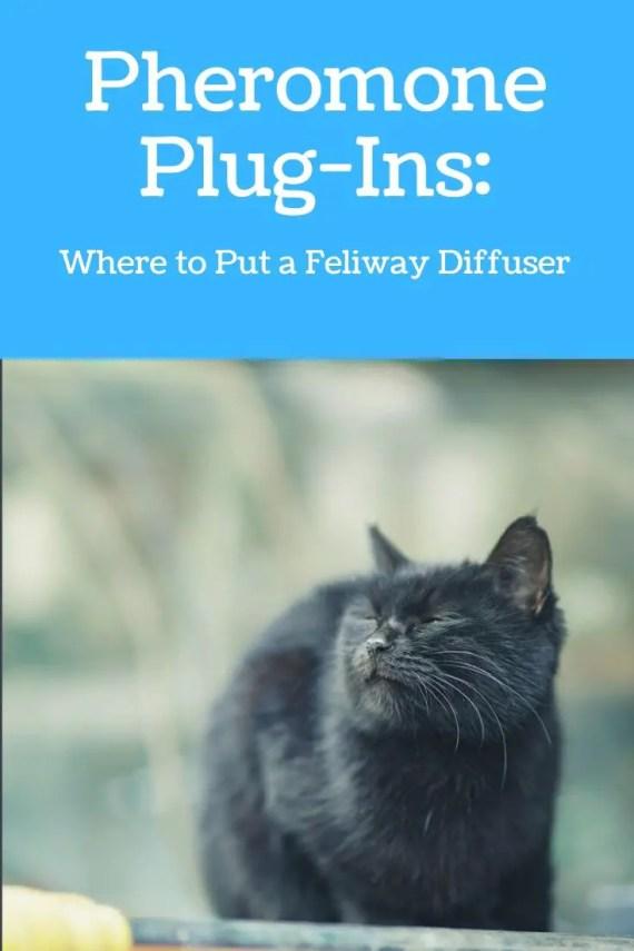 Pheromone Plug-Ins: Where to Put a Feliway Diffuser