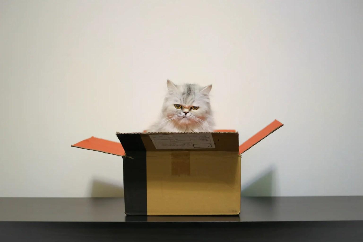 Cat looking grumpy sitting in a box