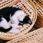 wicker carrier with a cat sleeping on it
