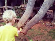 Feeding elephants