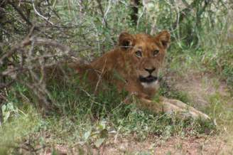 Southern Africa overland itinerary with kids