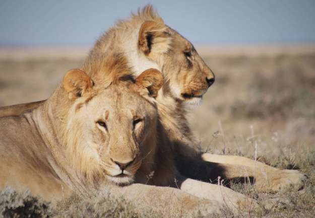 Namibia itinerary with kids
