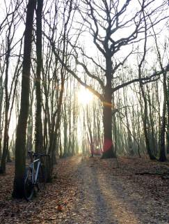 travers-dirti-woods