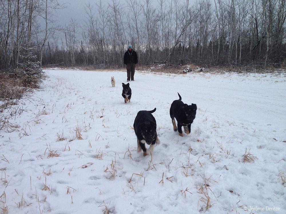 Bénévolat avec des chiens de traineau