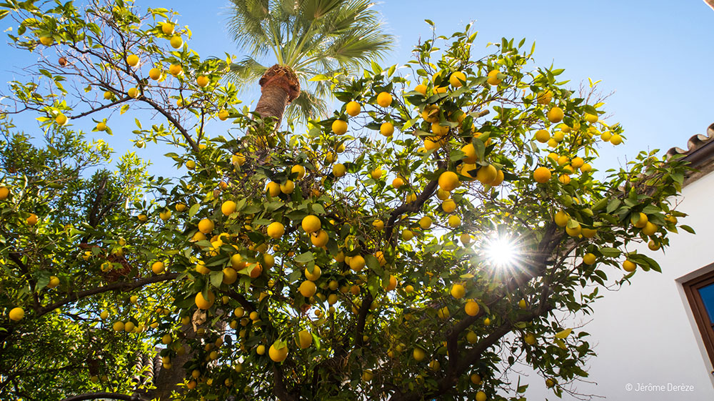 Casa Arabe et orangers