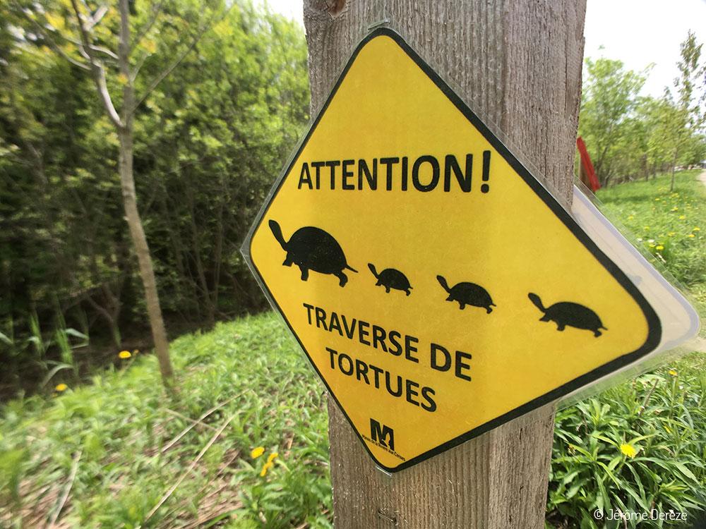 Visiter Estrie - Marais de la Rivière aux Cerises à Magog