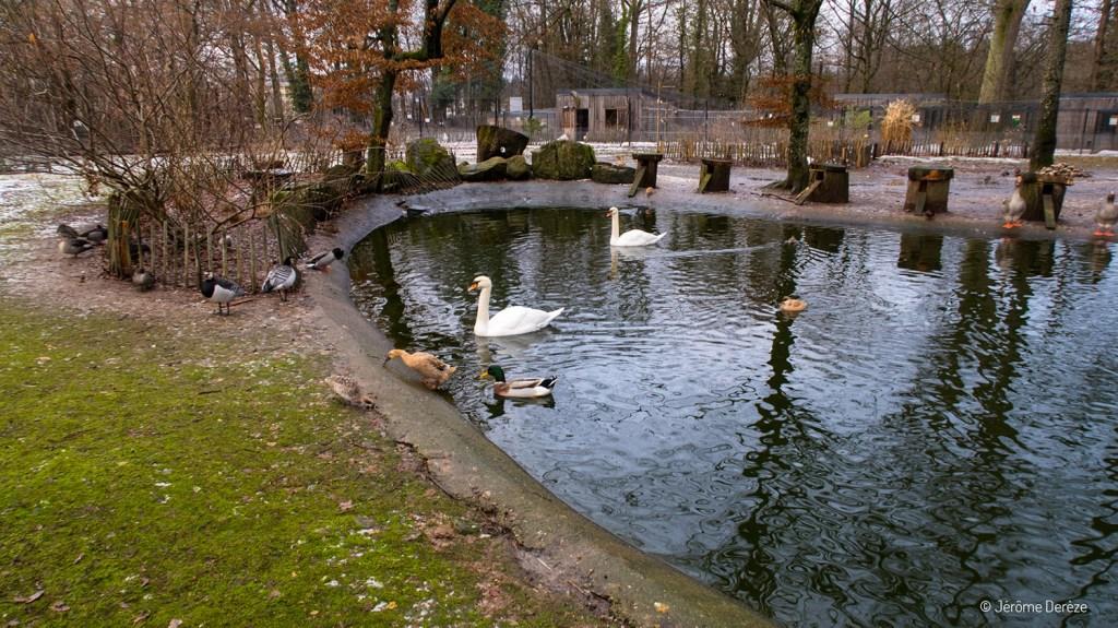 animaux parc du château d'épinal